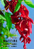 Plants and Flowers of Madeira (18 th edition )