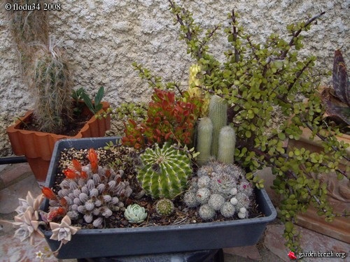 Composition Chez Ma Grand Mre Mes Plantes Grasses Et Cactus Les Galeries Photo De Plantes De