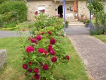 vignette roses anciennes dont alfred Colomb