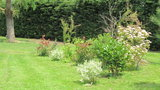 vignette Massif mixte (photinia , laurier,cotoneaster)