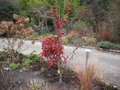 vignette Nandina Domestica 'Fire Power',Malus Red Sentinel