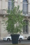 vignette Nancy : Arbre en pot